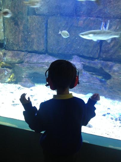 watching  the fish