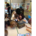 Visiting the newts in Mr Huggets class.