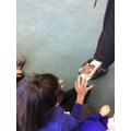 Child Holding animal