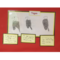 Tegan's sketch of an eagle using shading to add tone