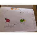 Ellena learnt about the lifecycle of a ladybird