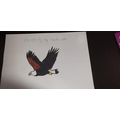 An Eagle by Charlie
