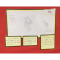 Tia's sketch of an eagle showing improvement step by step