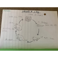 Ashley ~ lifecycle of a frog.