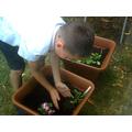 We chose a small, a medium and a big plant.