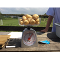 Team Rockets potatoes weighed 500g