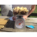 Team Gemsons potatoes weighed 800g