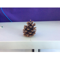 And pinecones.