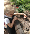 Year 1 had a great time planting their Sunflowers!