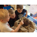 Investigating our dragon egg!