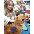 Flossie the pat therapy dog.