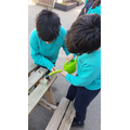 Yr 5 - watering our new planted seeds