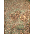 Forest School - making giant dinosaur footprints