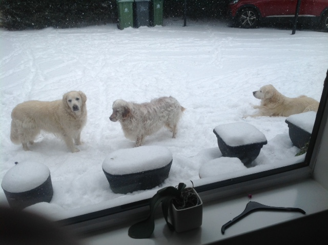 and his dogs in the snow