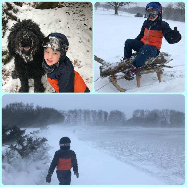 Noah hauling logs not dogs in Morley Blaizzard