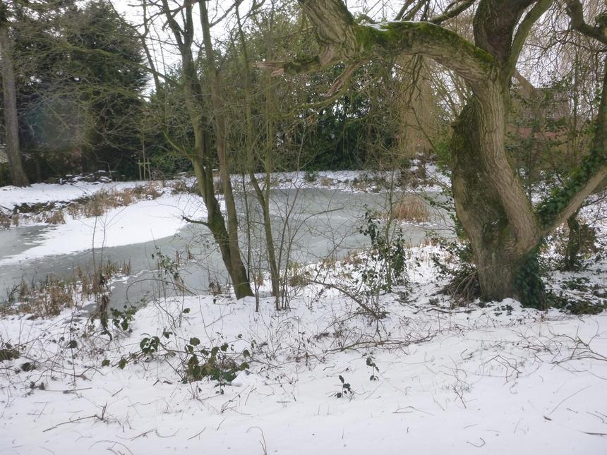 the frozen pond,
