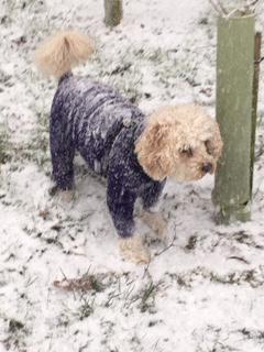 Isabella's dog, Barney