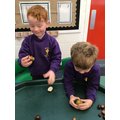 Opening conkers!
