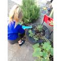 Watering our sensory garden