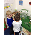 Our caterpillars became butterflies!