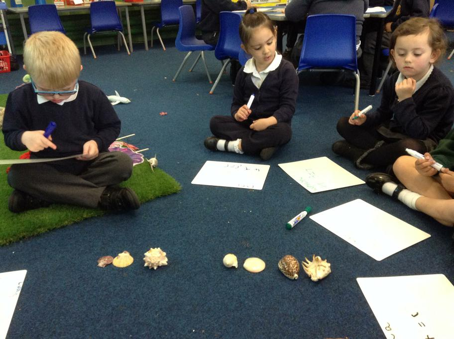Counting shells and writing a number sentence