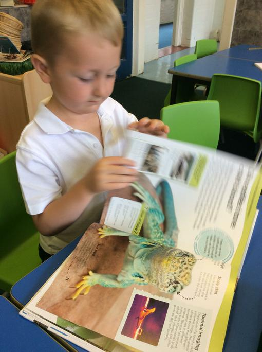 Thomas is reading & finding out all about Lizards