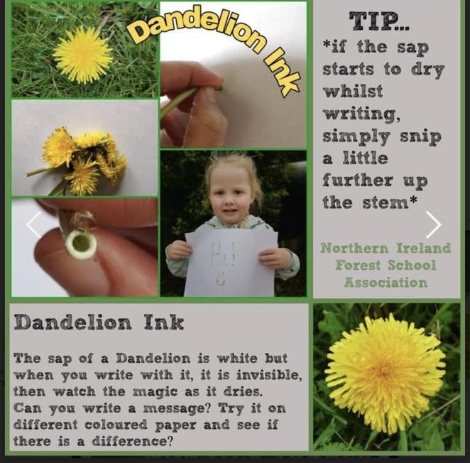 Dandelion Ink