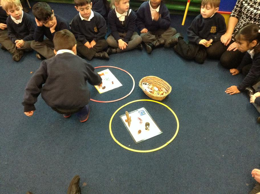 We sorted day and night animals
