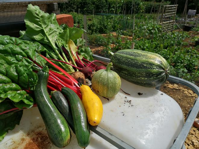 First big haul form the allotment. Yummy!