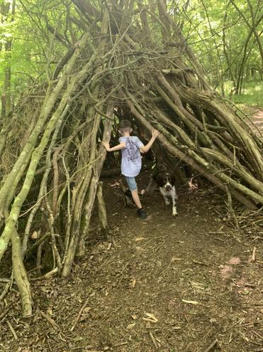 Archie exploring a den