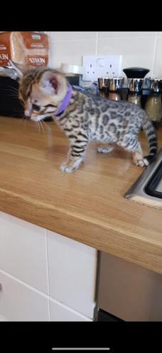 Immy's new kitten - how cute!