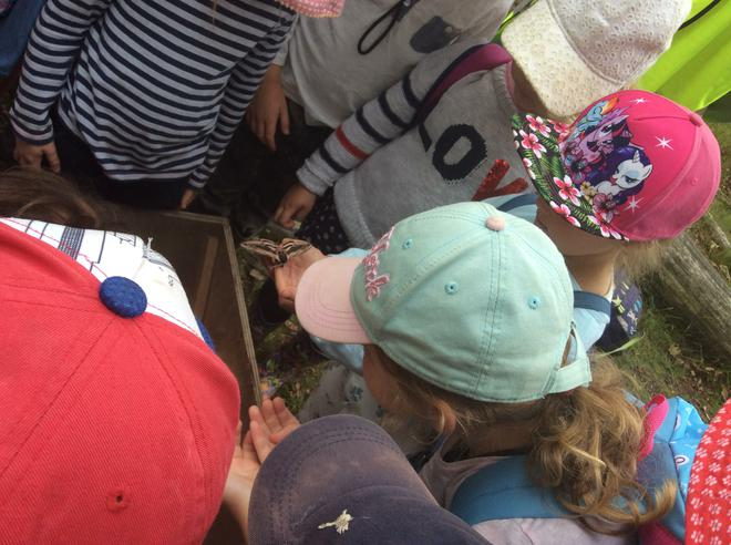 Looking at moths that were caught overnight.