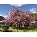 Old School' courtyard in bloom