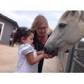 Sara and Mrs Oliver fed a horse.
