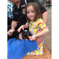 Lily fed a carrot to a Guineapig. Yum!