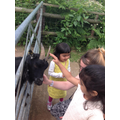 This goat loved Saee, Yatee and Miss Pugsley!