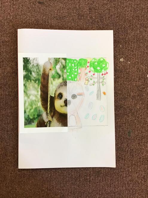 Rae's Sloth