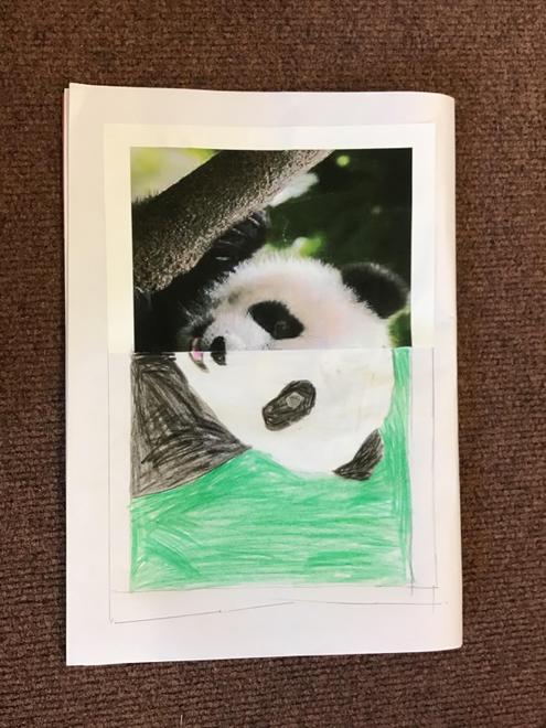 Lily's Panda