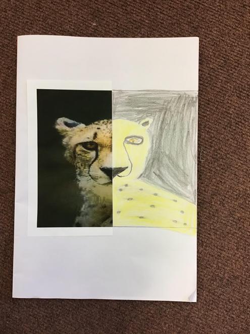 Taif's leopard