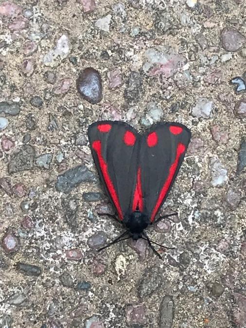 Bug hunter Dylan - butterfy or moth?