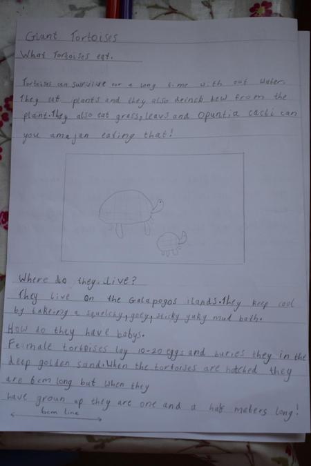 Chloe's page about giant tortoises
