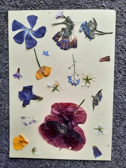 Emily pressed her flowers in a book.