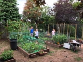 Wow! Look at Finley's veg patch now.