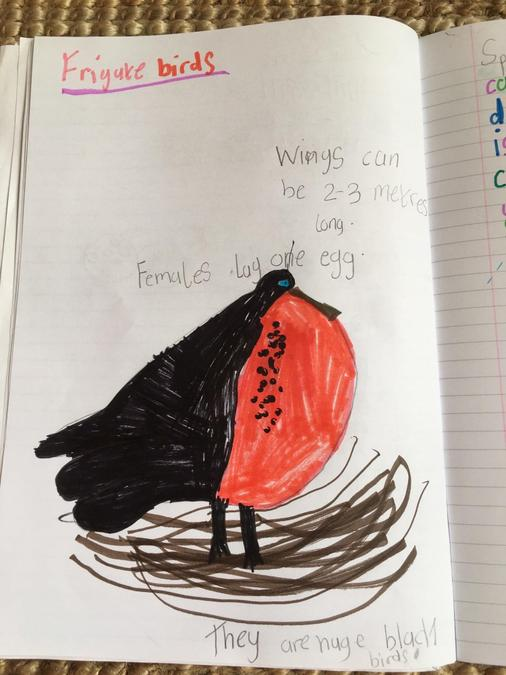 Annie's page about frigate birds