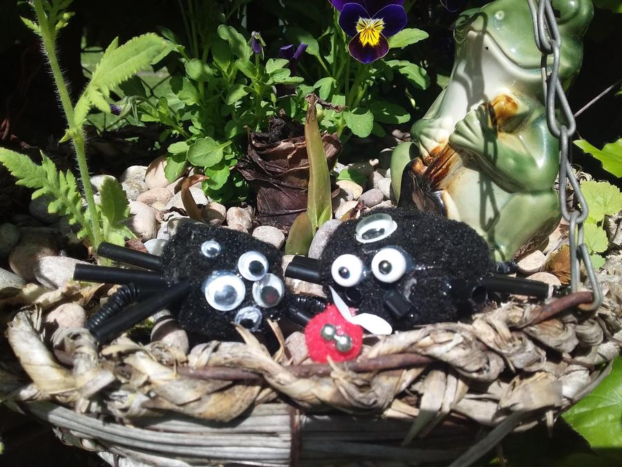 Phoebe's pompom spiders