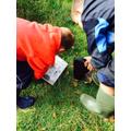Identifying creatures
