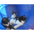 A very old picture of our 3 cats back in 2007