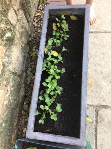 Grace has been gardening