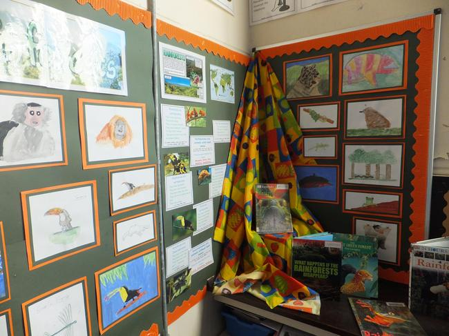 Y6 rainforest project