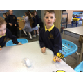 Exploring how pollination works